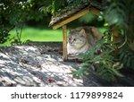 Cat Sitting In Bird Feeder