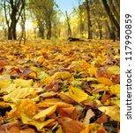 falling leaves | Shutterstock . vector #117990859