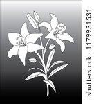 Lily  Lilium  Flower Vector...