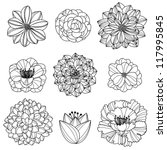 Stock vector vector collection of hand drawn flowers 117995845