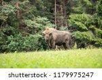 majestic european bison  bison... | Shutterstock . vector #1179975247