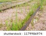 an unused railway line with... | Shutterstock . vector #1179986974
