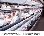 poultry farm for breeding... | Shutterstock . vector #1180051501