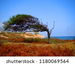 Solitary Tree On Beach From...