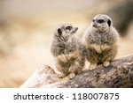 Two Meerkats Sitting On A...