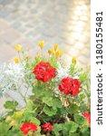 flowers on a  street lvov   Shutterstock . vector #1180155481
