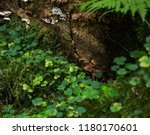 Clover And  Lichen Growing An...