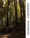 woods near mexico city | Shutterstock . vector #1180209904
