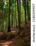 woods near mexico city | Shutterstock . vector #1180209907