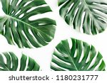 tropical palm leaves monstera... | Shutterstock . vector #1180231777
