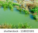 River With Green Water And...