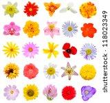 Assortment Flowers In America