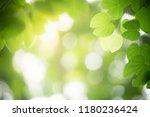 closeup nature view of green...   Shutterstock . vector #1180236424
