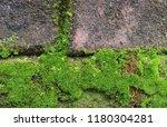 moss on old bricks wall...   Shutterstock . vector #1180304281