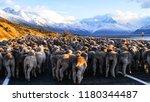 Sheep traffic jam along Lake Pukaki in Aoraki/Mount Cook National Park.