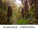 samaipata  bolivia   old fern... | Shutterstock . vector #1180410541