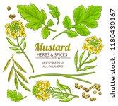 mustard plant vector | Shutterstock .eps vector #1180430167