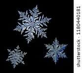 Small photo of Three snowflakes isolated on black background. Macro photo of real snow crystals: elegant stellar dendrites with glossy relief surface. Each snowflake presented at real scale relative to each other.