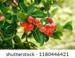 mango lime booze | Shutterstock . vector #1180446421
