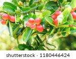 mango lime booze | Shutterstock . vector #1180446424