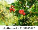 mango lime booze | Shutterstock . vector #1180446427