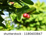 mango lime booze | Shutterstock . vector #1180603867