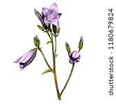 sprig bell flowers  sketch... | Shutterstock .eps vector #1180679824