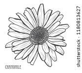 decorative chamomile  flower ... | Shutterstock .eps vector #1180813627