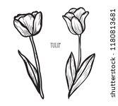 decorative tulip flowers ... | Shutterstock .eps vector #1180813681