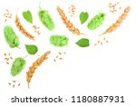 hop cones with ears of wheat... | Shutterstock . vector #1180887931