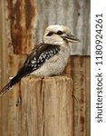 a kookaburra bird perched on a... | Shutterstock . vector #1180924261