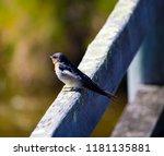 a dainty delightful  little... | Shutterstock . vector #1181135881