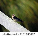 a dainty delightful  little... | Shutterstock . vector #1181135887