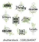spices and herbs lettering ... | Shutterstock .eps vector #1181264047