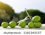olive branch with green leaves. | Shutterstock . vector #1181343157