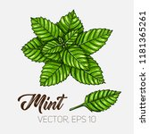 mint  culinary herb  spices... | Shutterstock .eps vector #1181365261