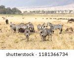 a small herd of zebra and... | Shutterstock . vector #1181366734