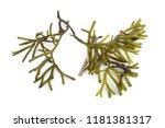 algae isolated on white | Shutterstock . vector #1181381317