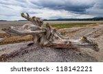 Large Tree Stump Driftwood On...