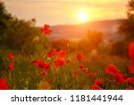 Red Poppies In The Field In Th...