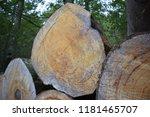 cut logs in a beech forest | Shutterstock . vector #1181465707