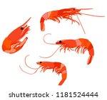 set food  sea  shrimp | Shutterstock .eps vector #1181524444