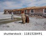 salar de uyuni  bolivia  march...   Shutterstock . vector #1181528491