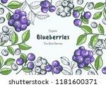 Blueberries. Vintage Vector...