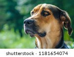 beautiful german shepherd and... | Shutterstock . vector #1181654074