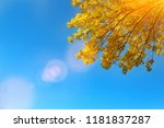colorful leaves  in the autumn... | Shutterstock . vector #1181837287