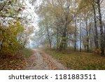 autumn forest. fog. rain.... | Shutterstock . vector #1181883511