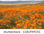 antelope valley  ca | Shutterstock . vector #1181949151