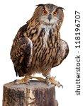 Stock photo owl isolated 118196707