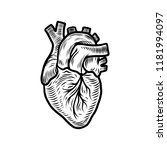 anatomical heart organ icon.... | Shutterstock .eps vector #1181994097